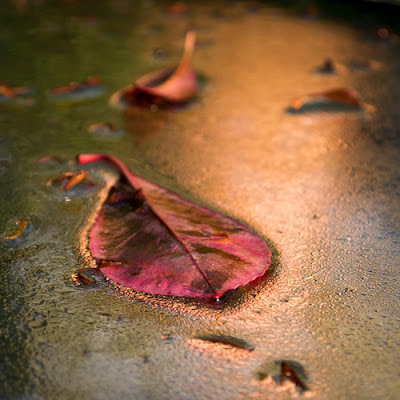 Wet Leaf, 2012 © Graham Dew