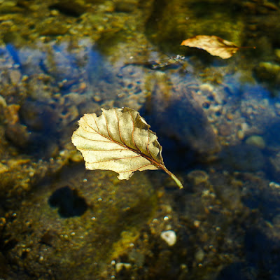 Floating Leaf, 2009 © Graham Dew
