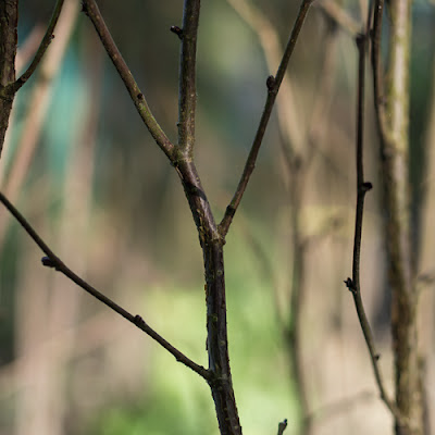 Twyford Allotments – Twigs, 2012 © Graham Dew