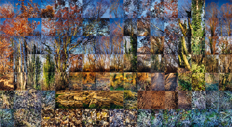 Suffolk winter © Noel Myles