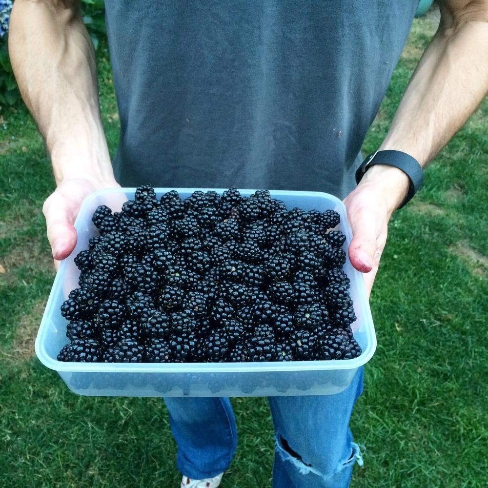 Fresh Oregon Blackberries.