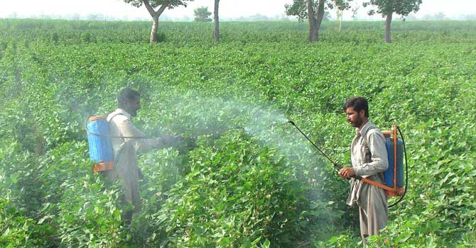 http://www.dawn.com/news/745956/pakistani-crop-pickers-exposed-to-hazardous-pesticides-study-reveals Photo: APP
