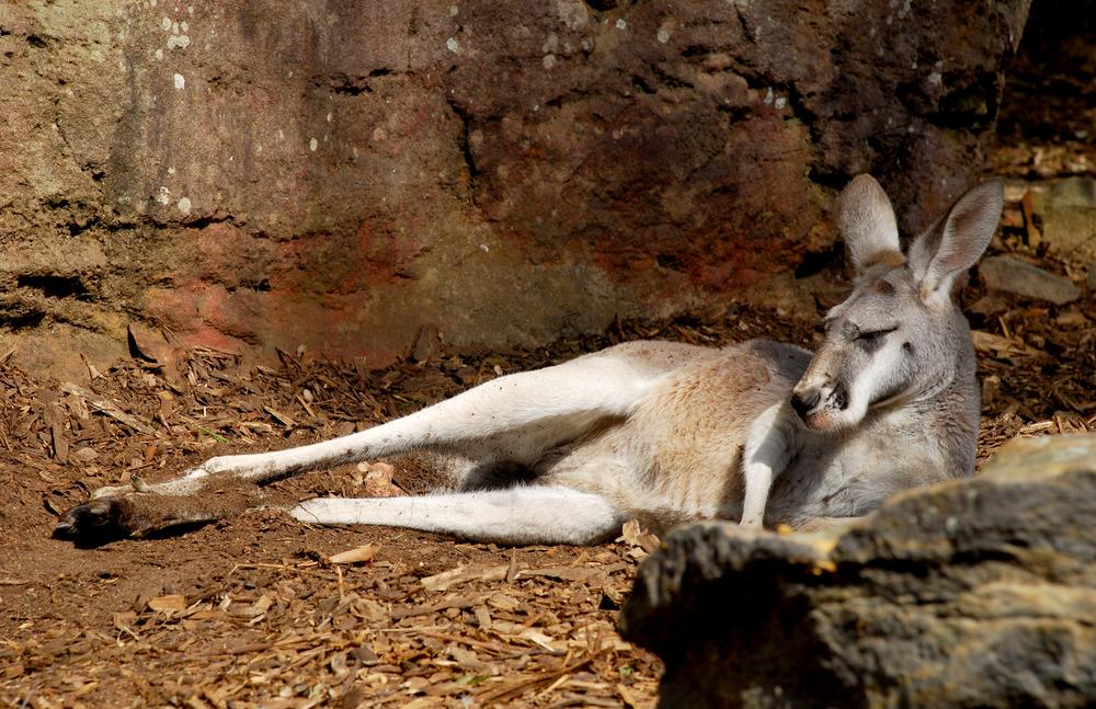 Australia 13.jpg