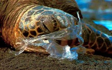 Sigh.  Photo: Plastikeep
