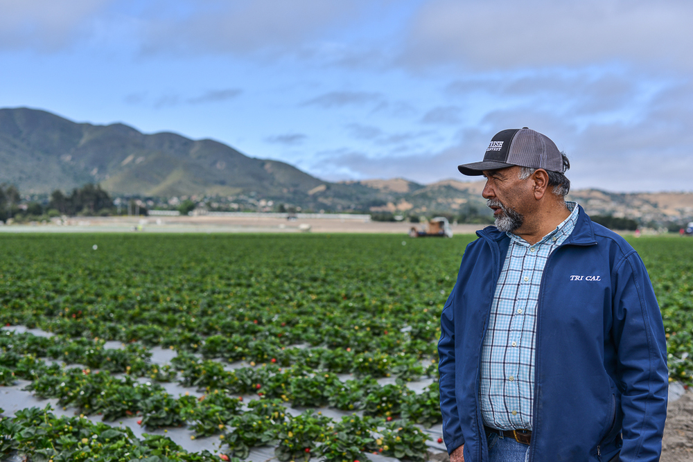 Jesús Alvarado. Strawberry farmer who realized his American dream with hard work, dedication and lots of heart.