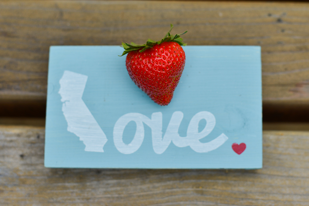 CA Strawberry Tour-16.JPG