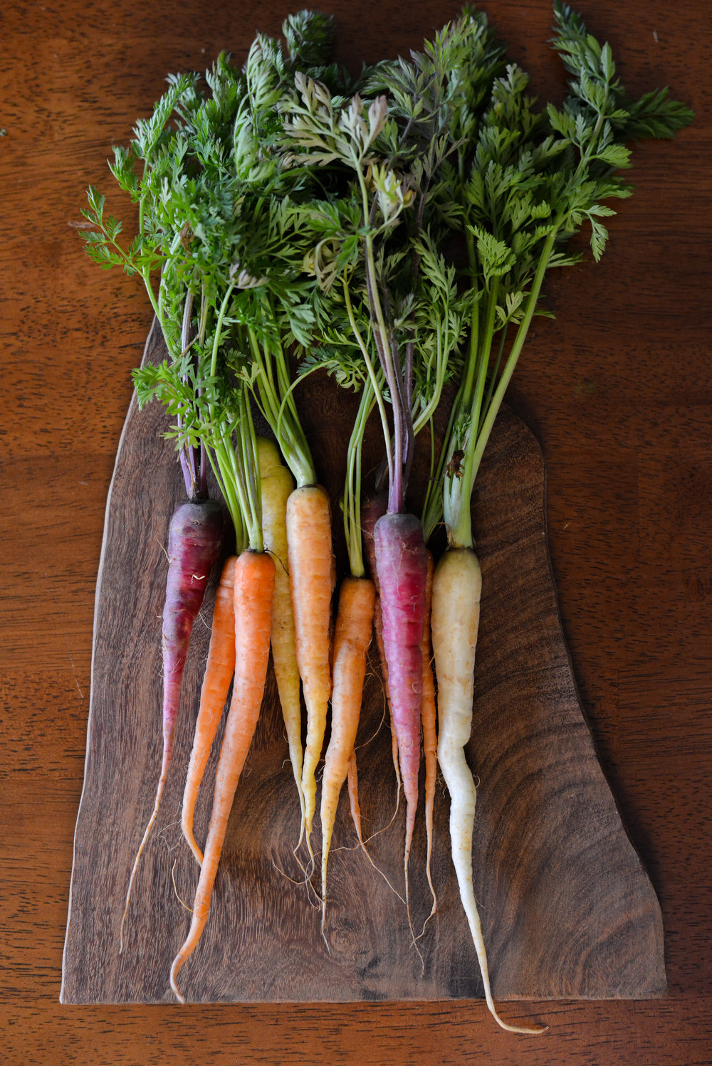 Colorful, beautiful carrots from the farmer's market.