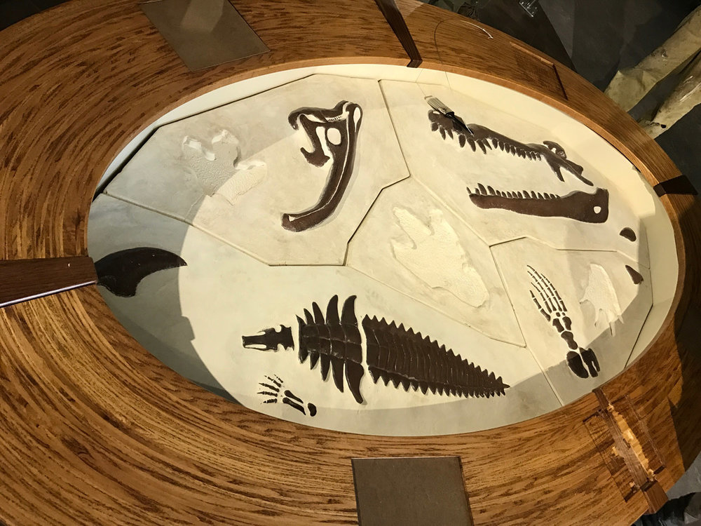 asheville_science_fossils4.jpg