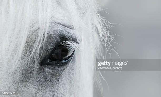 Photo by Abramova_Kseniya/iStock / Getty Images