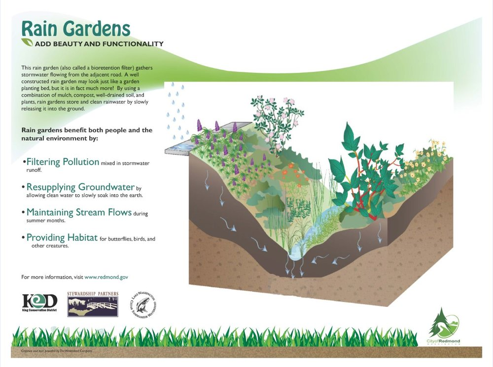 Credit:  12,000 Rain Gardens in Puget Sound