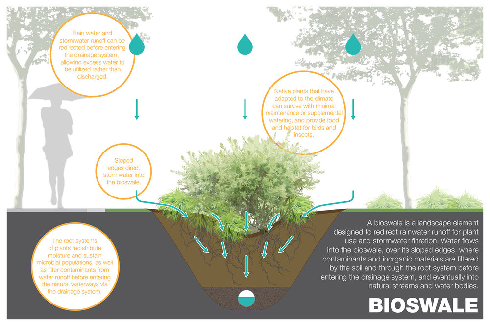 Bioswale-Graphic.jpg