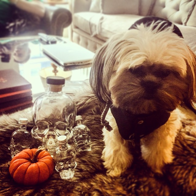 Happy Halloween!! 🎃💀💀💀😎  @lilbibiboo