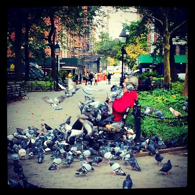 Ahhhhh NYC nature 😳🌆🐝🐥🌿 #animalkingdom (at Wasington Square Park)