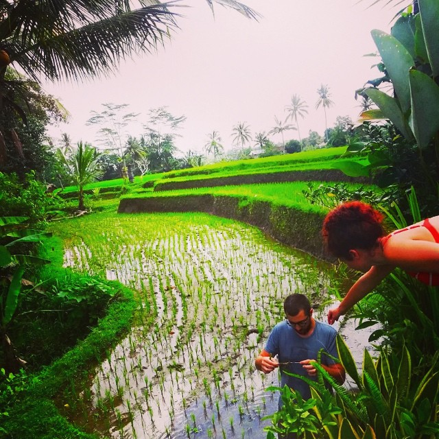 That time we were contemplating where rice comes from and how it grows, and instead of googling, @zacksafe14 snuck down into the rice fields to find out.   #mindblown #deepthoughts #rice #bali (at ubud, bali)