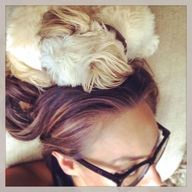 #puppyhat   #lilbibi