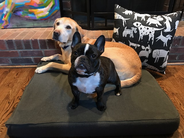 Pinot  and  Mellow  relaxing on their Revolution dog bed and Woof pillow! Owned by  Jill Harrill