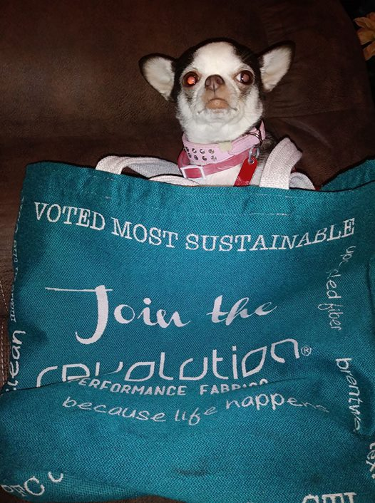 Penny  saying 'Hello' from her Join the Revolution tote! Owned by  Chris Howard