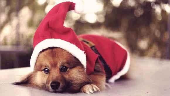 christmas dog 2.jpg