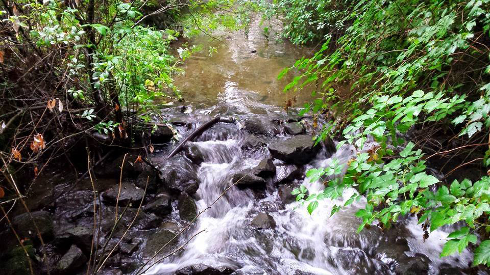Hoy Creek (Photo: Robbin Whachell)