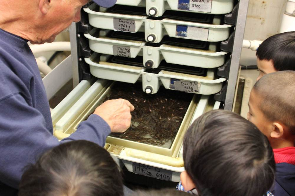 A society volunteer shows children salmon fry in an incubation tray at Hoy Creek Hatchery in Coquitlam.