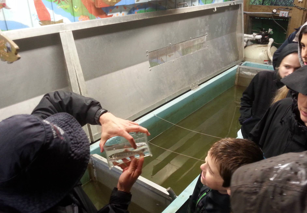 A society volunteer shows school children a coho smolt over the Capilano trough during a school visit.
