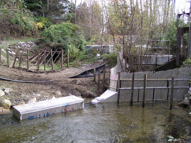 Trap area in Hoy Creek just below the Coquitlam fire station.