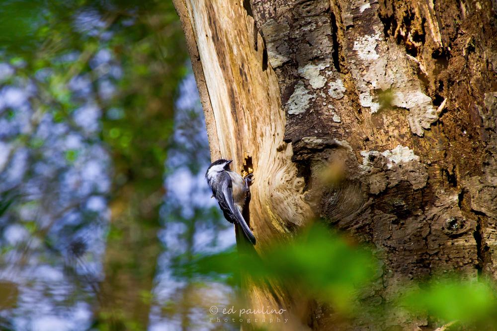 HSWS-Bird-Ed-Paulino