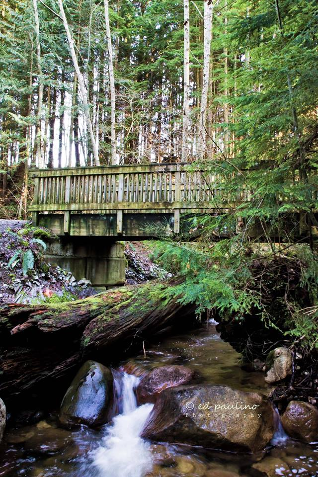 Scott Creek below Eagle Mountain Drive, Coquitlam (Photo: Ed Paulino)