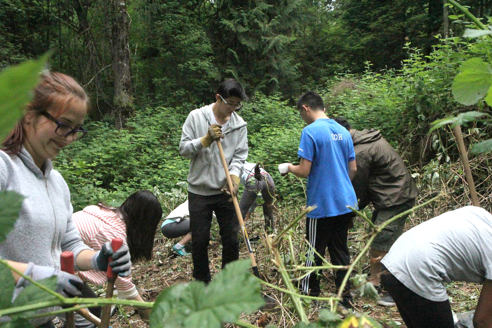 Volunteers from Hoy-Scott Watershed Society and Pinetree School worked to remove Himalayan Blackberry in Upper Hoy Creek in Coquitlam