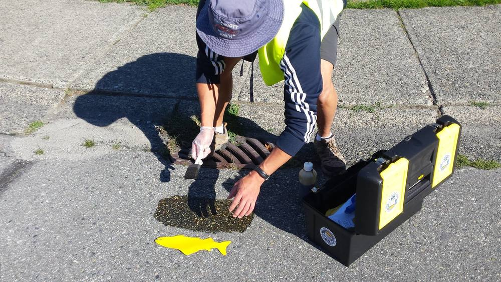 Hoy Creek Hatchery manager, Rodney Lee spreads adhesive to secure a stick-on yellow fish marker to mark a storm drain in Coquitlam. (Photo: Robbin Whachell)