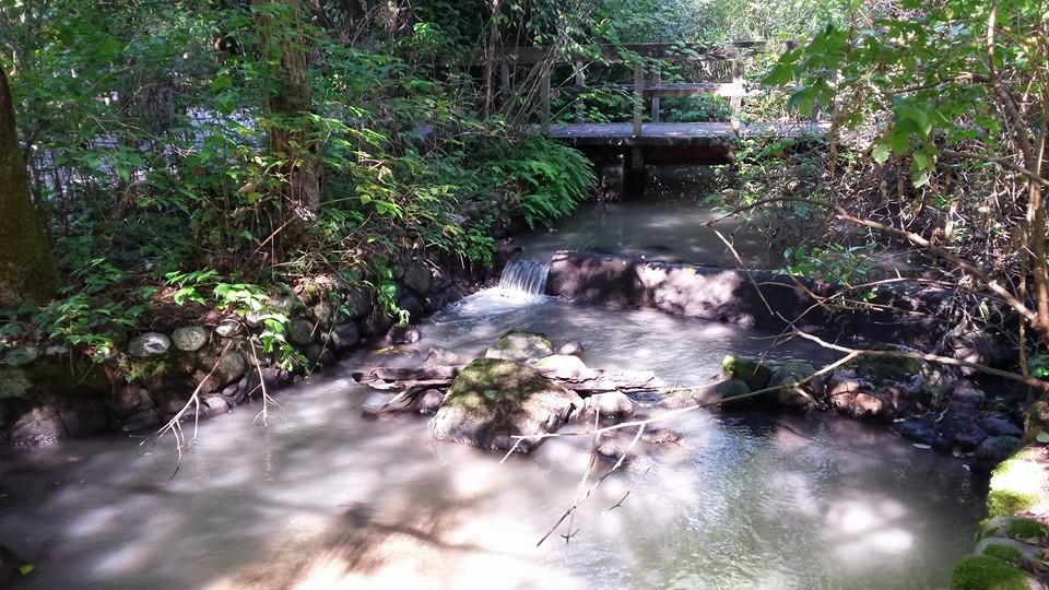Hoy Creek on September 11th, 2015 at 3:30pm (Photo: Robbin Whachell)