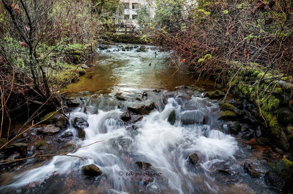 Hoy Creek, Coquitlam , close to the hatchery... (Photo: Ed Paulino)