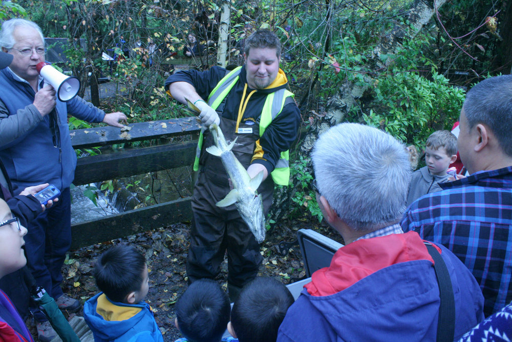 AJ, a volunteer with Hoy-Scott Watershed Society shows the underside of a chum salmon while Maurice from the DFO commentates. (Photo: Robbin Whachell / HSWS)