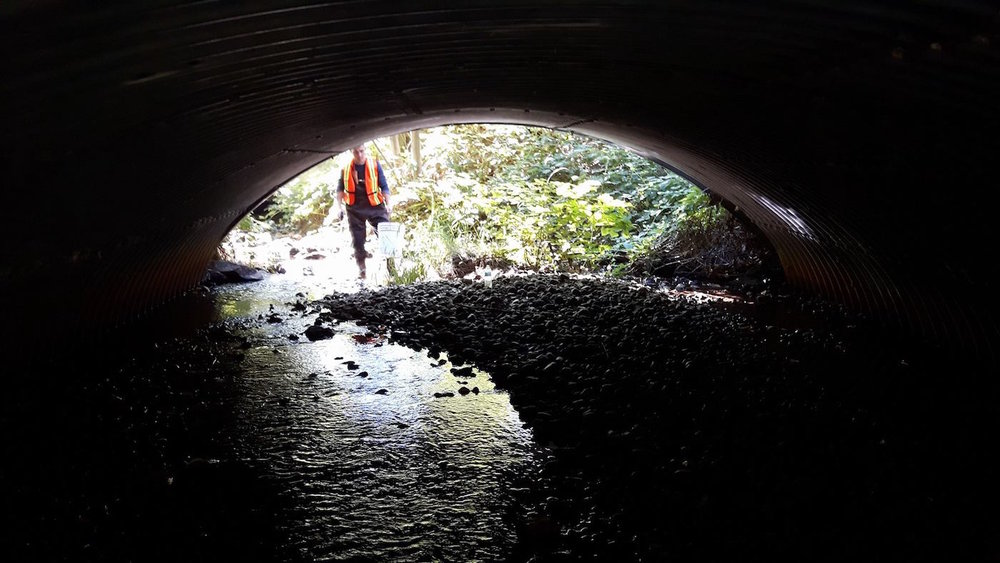 Cleaning Hoy Creek under the bridge on Guildford in Coquitlam