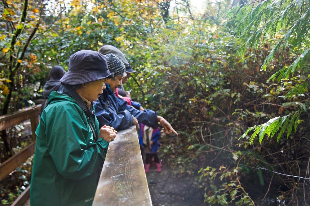 Visitors and residents of Coquitlam view salmon in Hoy Creek during Salmon Come Home - salmon viewing is at its peak into December.  (Photo: Tina-Louise Harris)