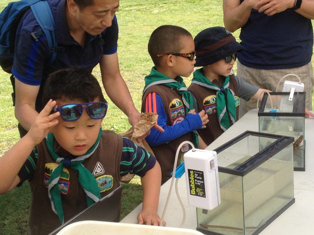 Boy scouts check out creepy crawlies from Hoy Creek at the Jamboree in Belcarra Regional Park.