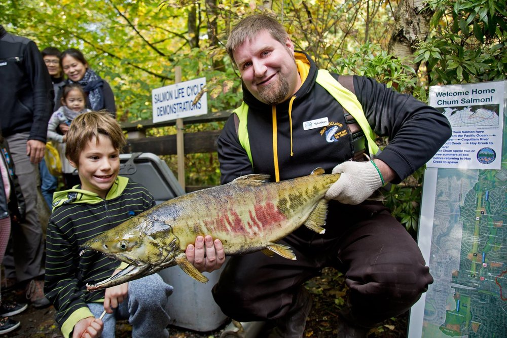 HSWS volunteer, AJ holds up a chum salmon at Salmon Come Home 2017 (City of Coquitlam photo)