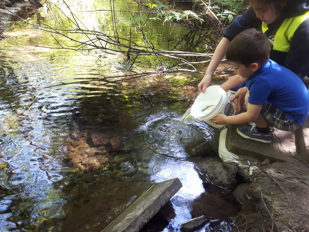 A boy releases coho into Hoy Creek during the 2018 event assisted by a Hoy-Scott Watershed Society volunteer (Photo: Robbin Whachell)