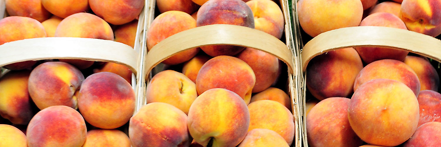 All About Peaches — Fishers Orchard