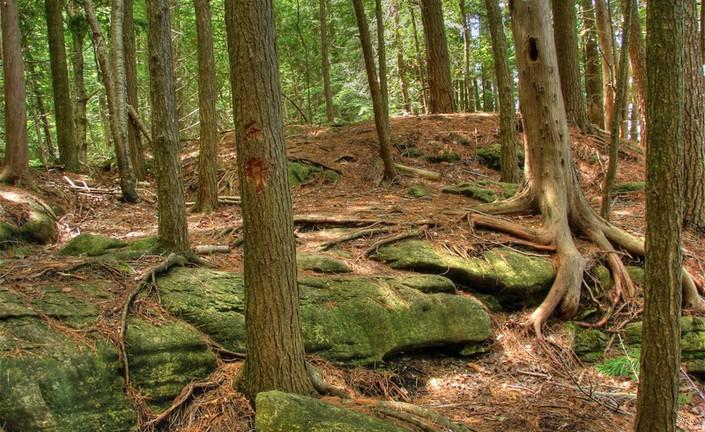 0__Niagara Escarpment - Bruce Trail.jpg