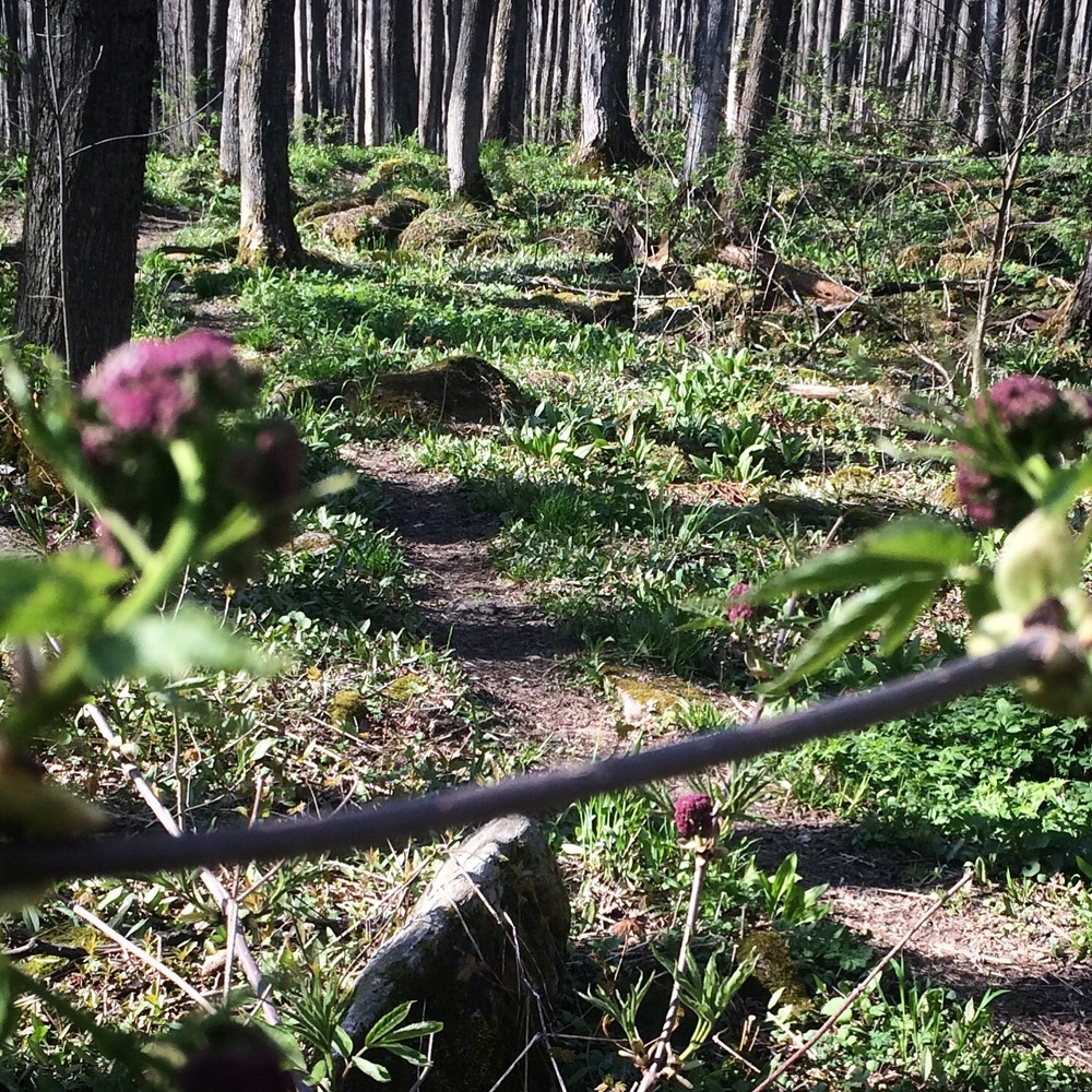 hiking_kolapore_uplands