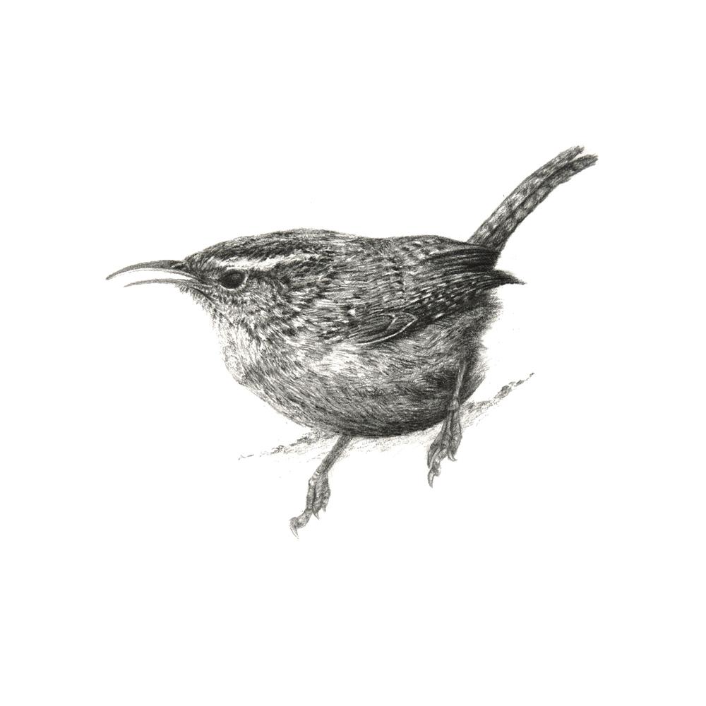 Birdie_I.jpg