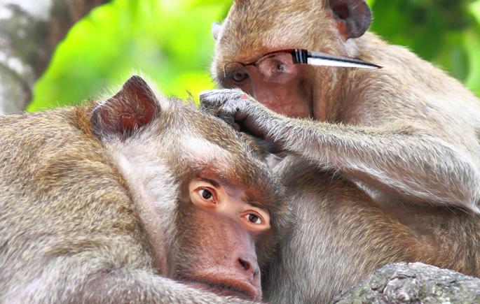 MonkeyBusiness_685x435