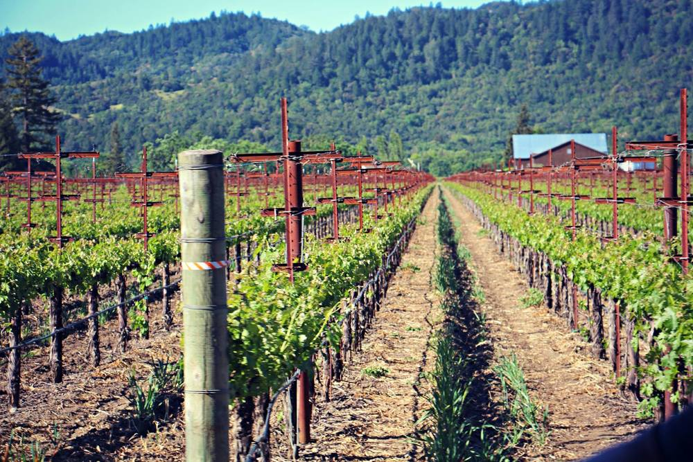 Beautiful vineyards at Foley-Johnson