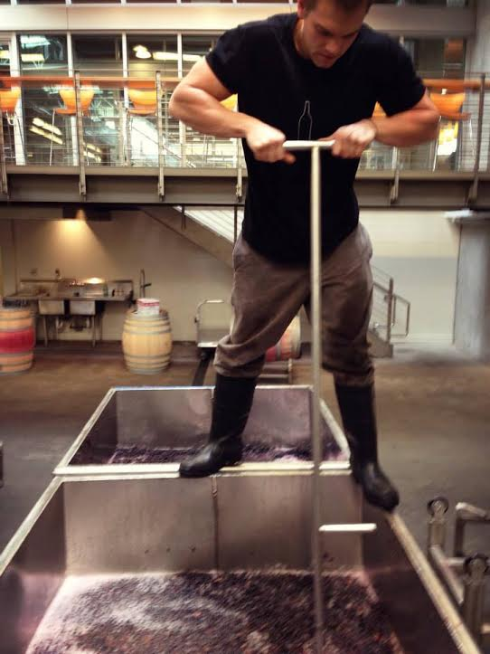 Andrew Januik working on his Cabernet.jpg