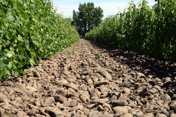 Great shot here of the stony terroir at the Rocks District of Milton-Freewater.