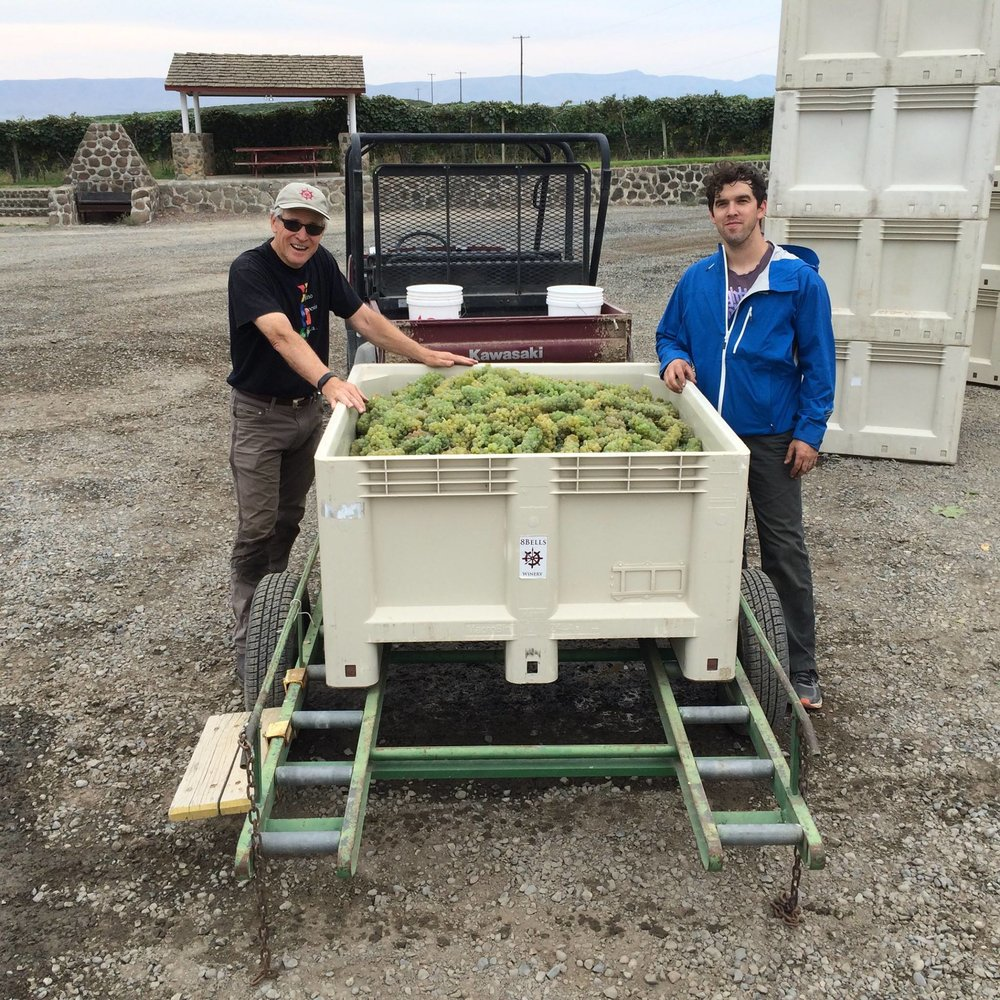 Great photo here of Eight Bells owners sorting through some Viognier from the Red Willow Vineyard.