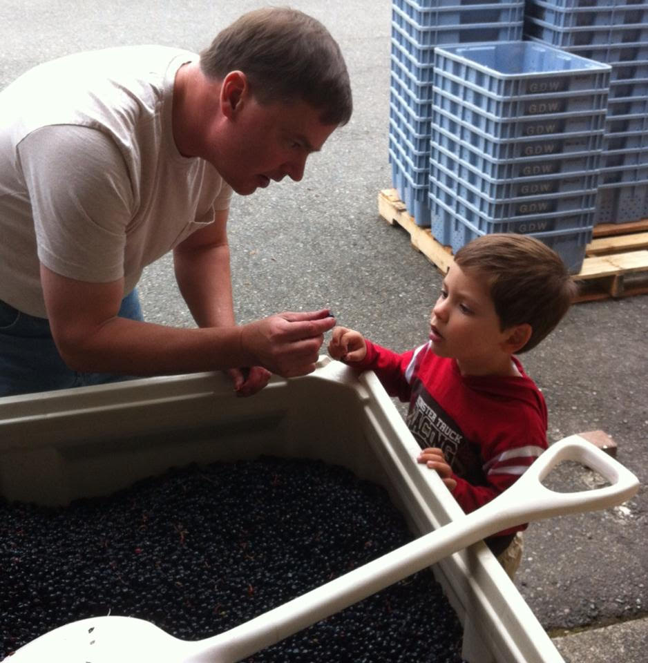 Charlie Auclair (L) is tasting grapes during the 2016 harvest.