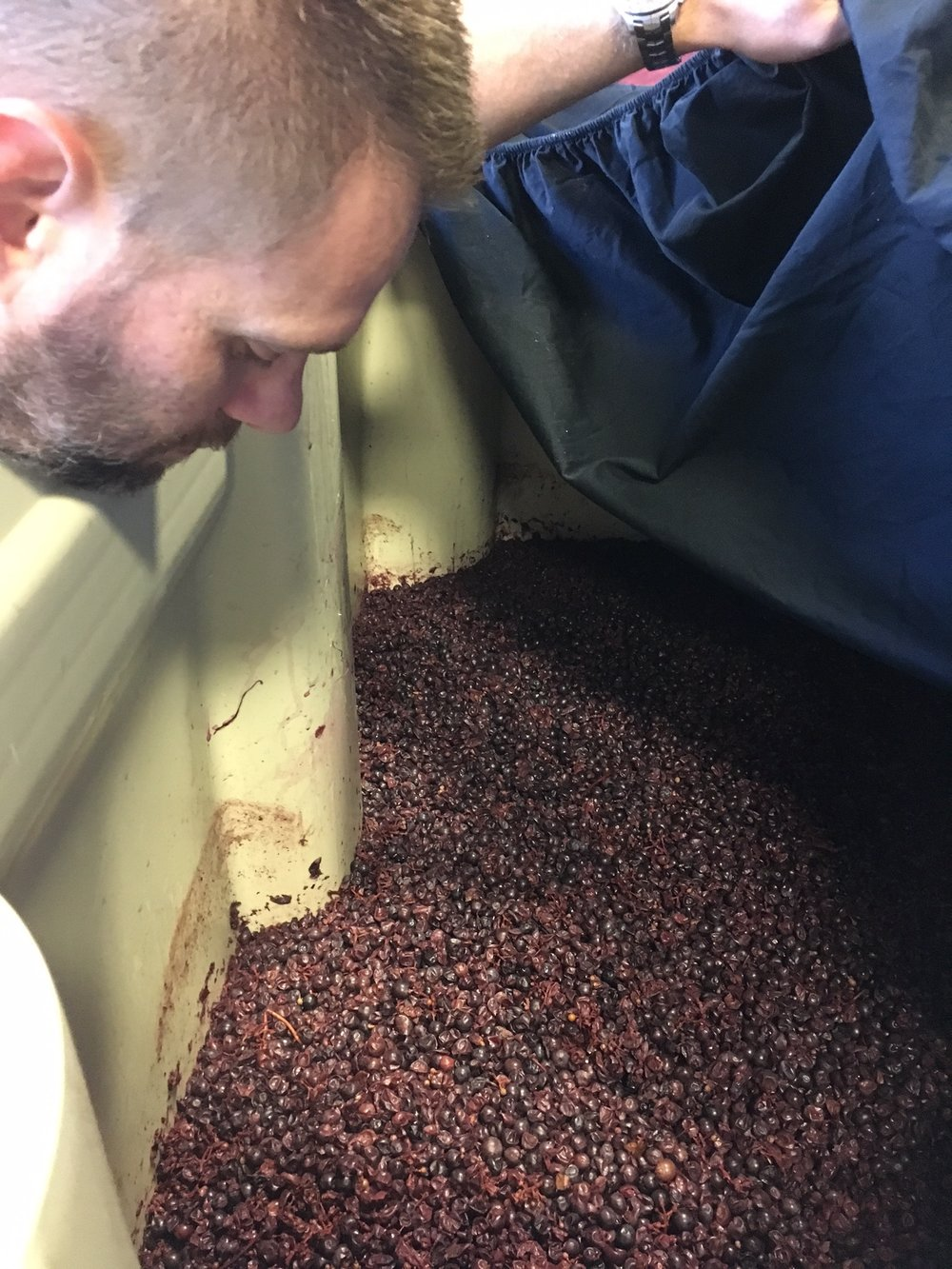 Brian Grasso checking on some of his fruit in a fermenter from the 2017 vintage.