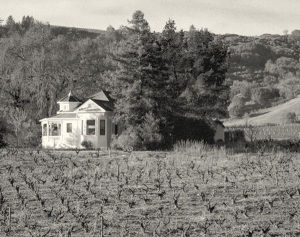 Picture here of the 100 year old house and vineyard owned by the Seghesio family.